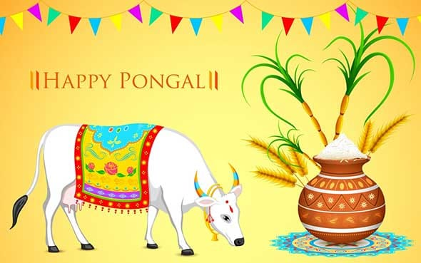 Happy pongal images wishes tamil photo pics with status download