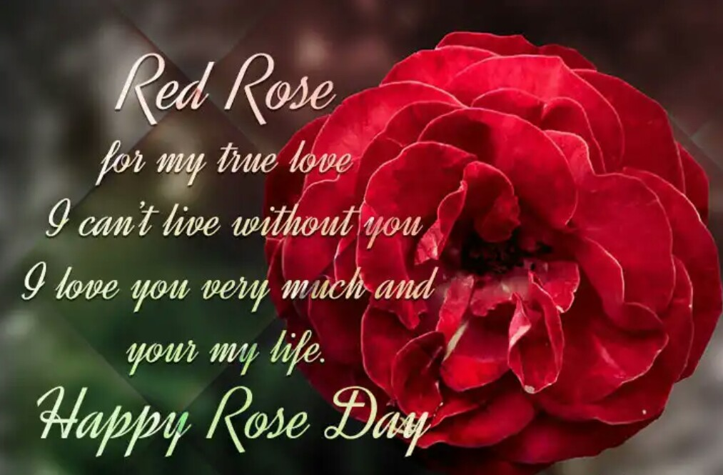 happy rose day about images