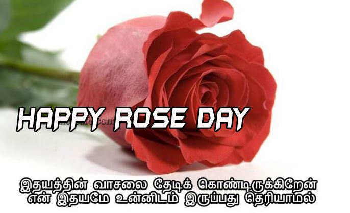happy rose day images in tamil