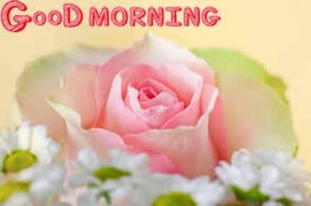 Good morning rose images pics photo wishes for lover download