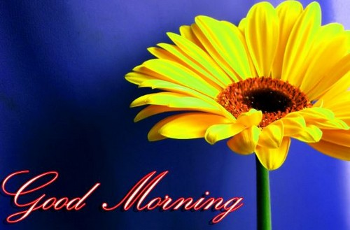 good morning flowers latest images
