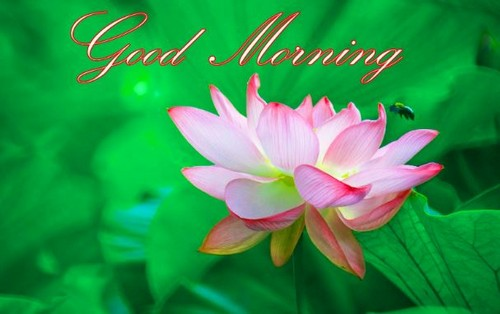 good morning wishes friends