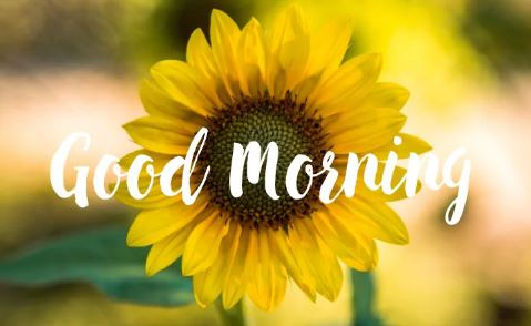 awesome good morning photo download for whatsapp and facebook