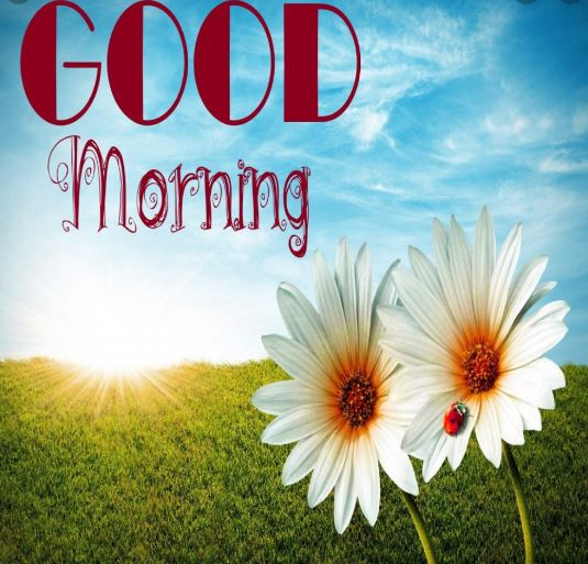 good morning best photo download facebook story