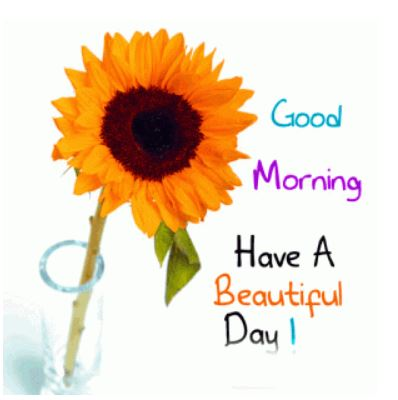 good morning have a beautiful day pics status download in hd