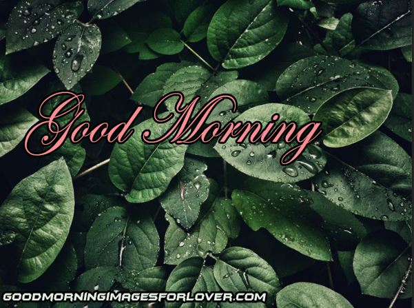 Good Morning nature images photo pics for whatsapp and facebook download