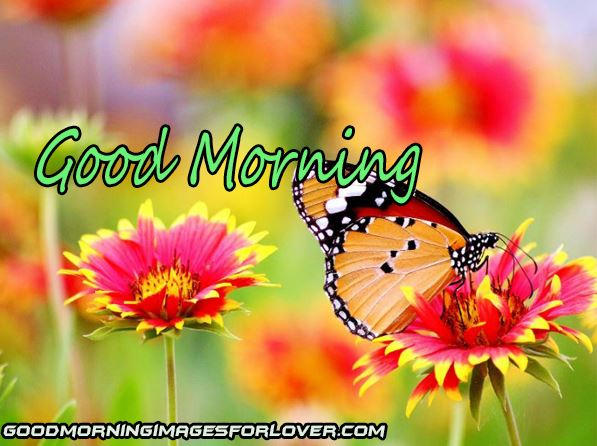 good morning photo with butterfly