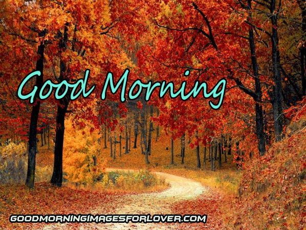 good morning photo with tree download