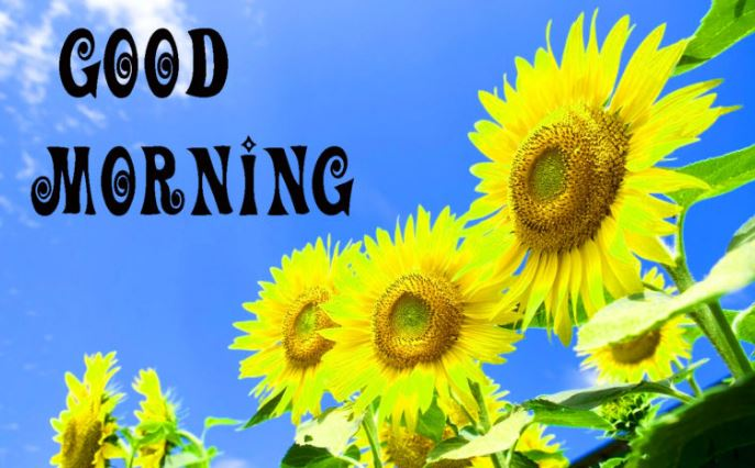 good morning pics with sunflower download in hd