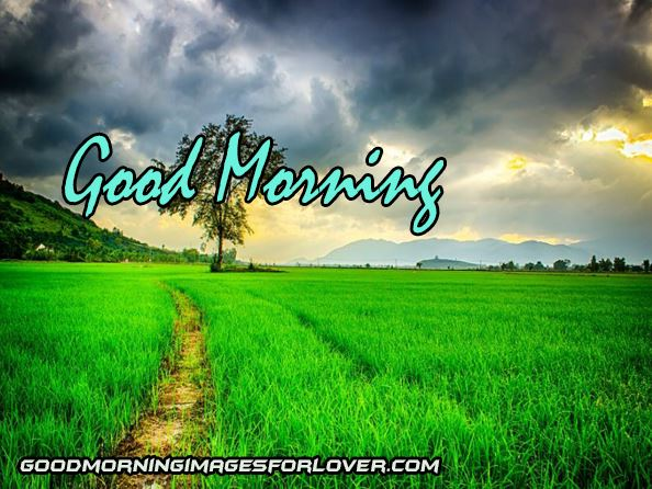 good morning wishes nature images