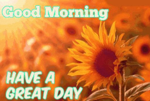 have a great day good morning sunflowers images download in hd