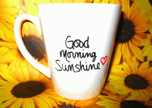 sunflower good morning cup images photo pics download