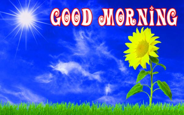 top good morning pictures download for whatsapp