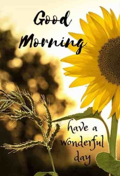 toppest good morning photo download
