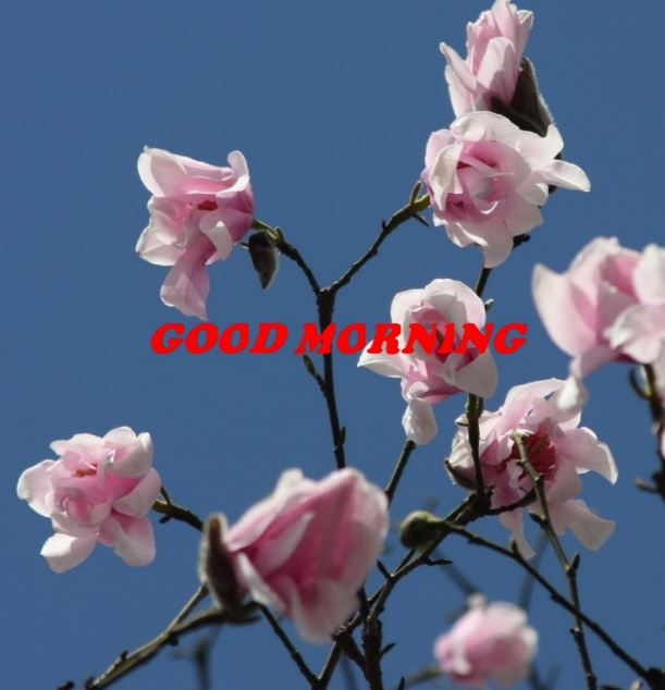 good morning blue flowers images