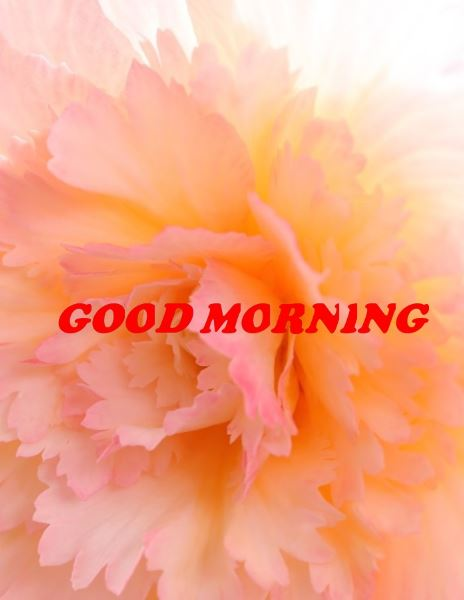 good morning hd images with flowers