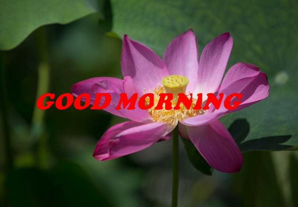 good morning images with beautiful flowers