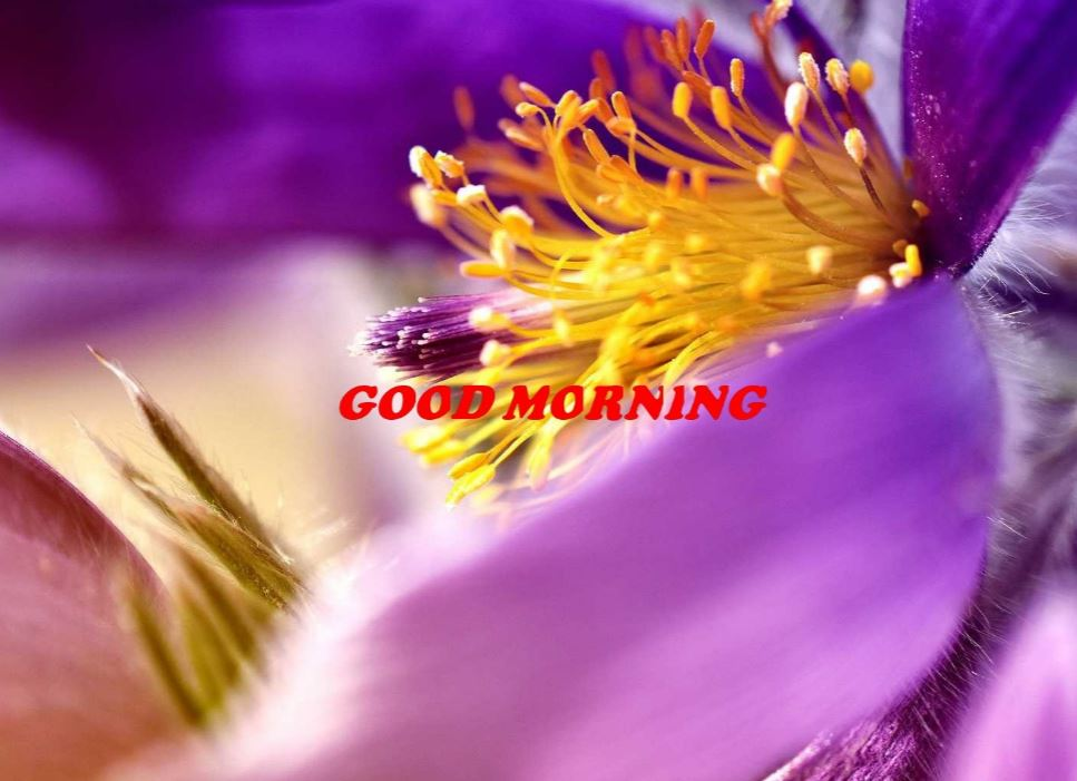 good morning images with flowers facebook