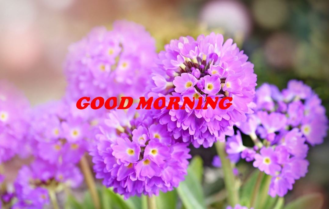 New latest good morning images with flowers download Hd download