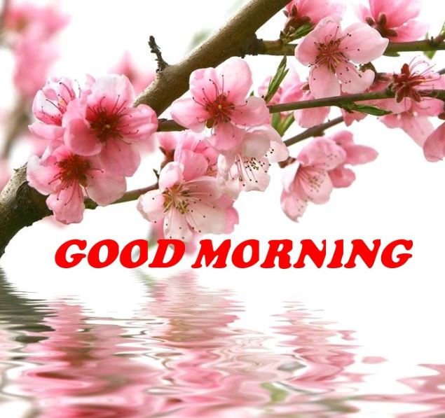 good morning images with flowers pictures