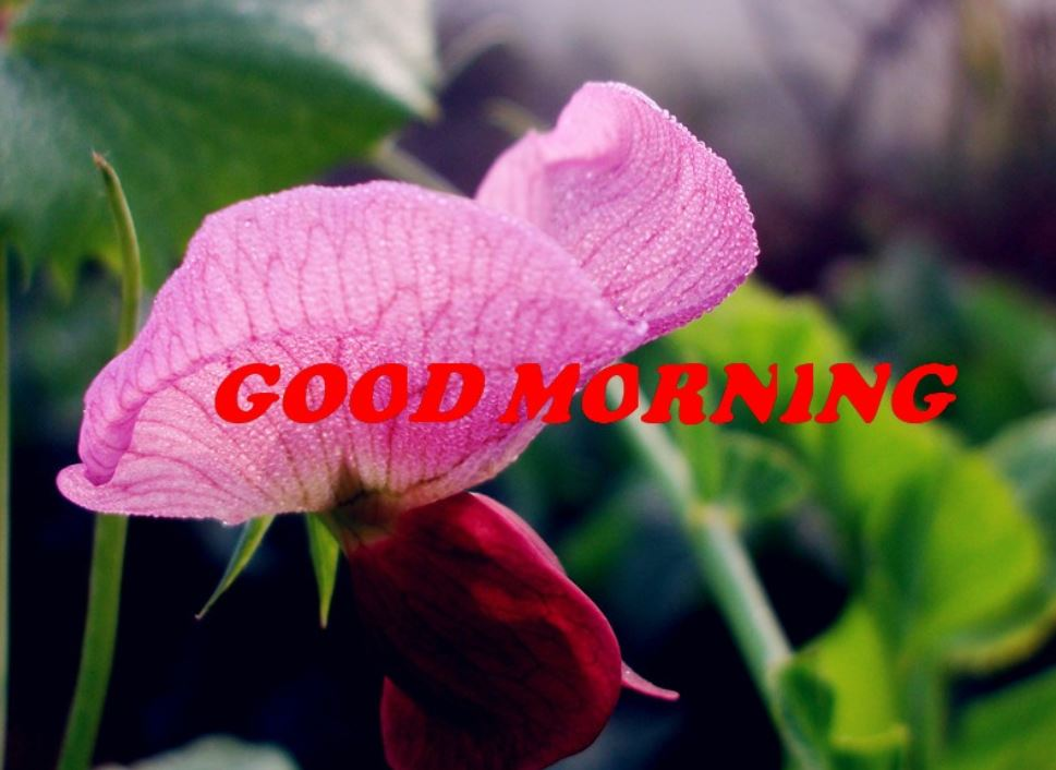 good morning images with purple flowers