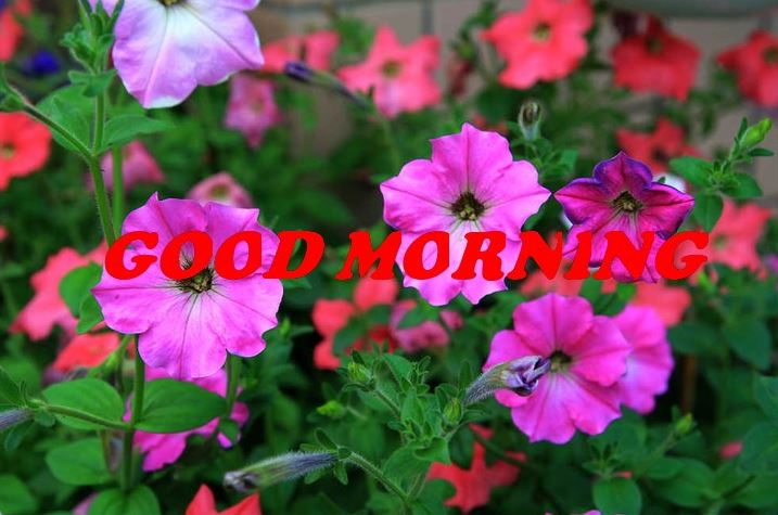 good morning quotes with flowers images