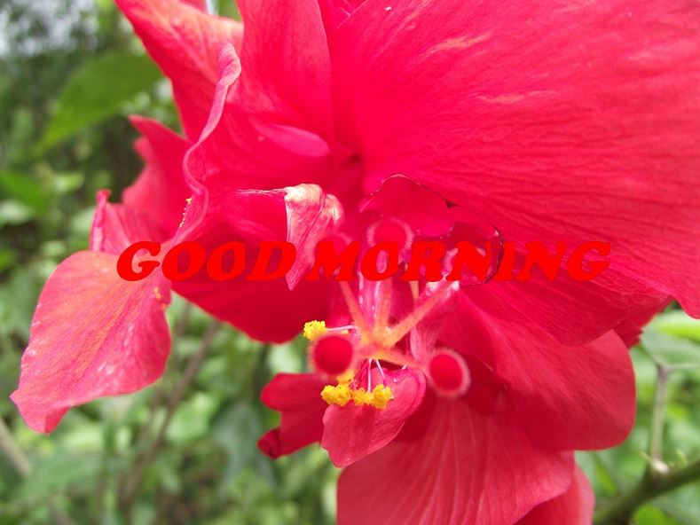 hd images of good morning with flowers