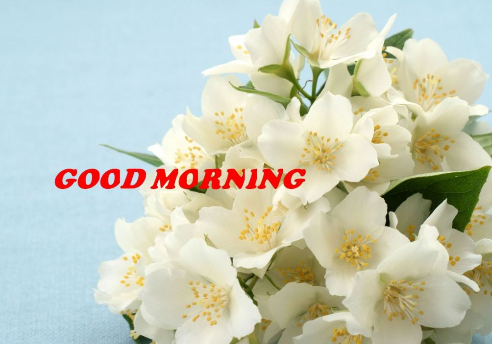 images of good morning with tea and flowers